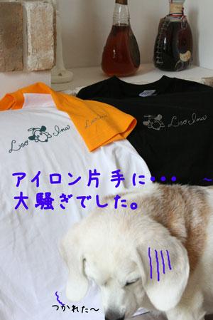 3_20090616203718.jpg