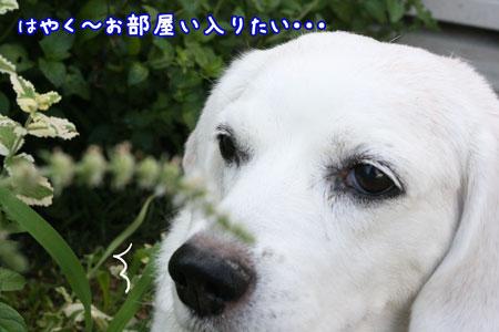 3_20090804162548.jpg