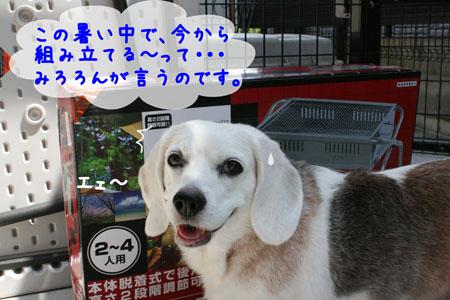 3_20090808142050.jpg