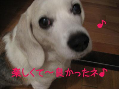 4_20081026140709.jpg