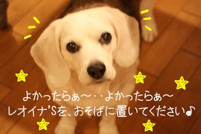 4_20081211205728.jpg