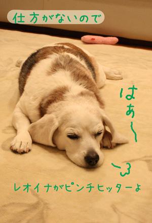 4_20090110193233.jpg