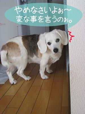 4_20090201182713.jpg