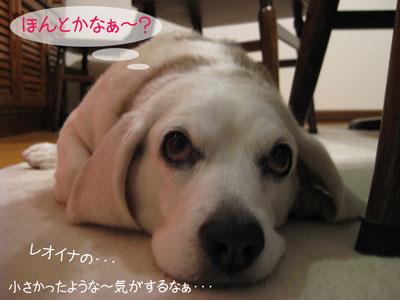 4_20090203215021.jpg