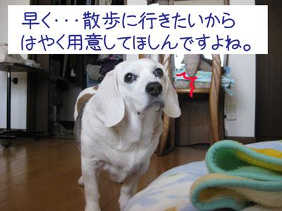 4_20090208184220.jpg