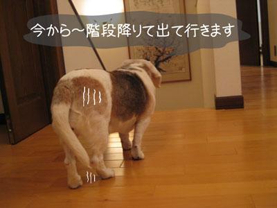 4_20090209185156.jpg