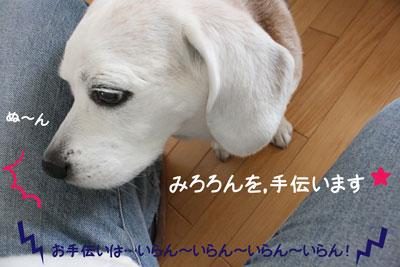 4_20090210180054.jpg