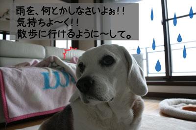 4_20090213155441.jpg