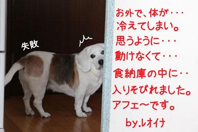 4_20090216180946.jpg