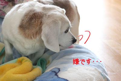 4_20090218213039.jpg