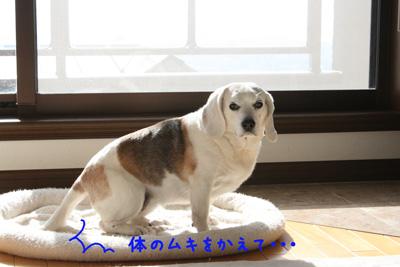 4_20090305202834.jpg