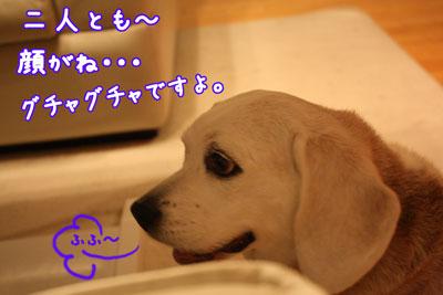 4_20090408204233.jpg