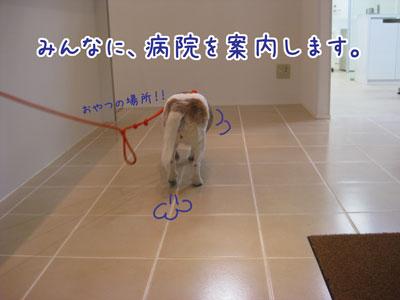 4_20090409220547.jpg