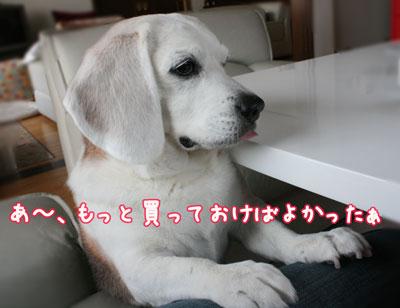4_20090411205045.jpg