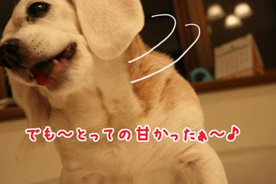 4_20090412140109.jpg