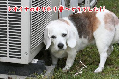 4_20090418215605.jpg