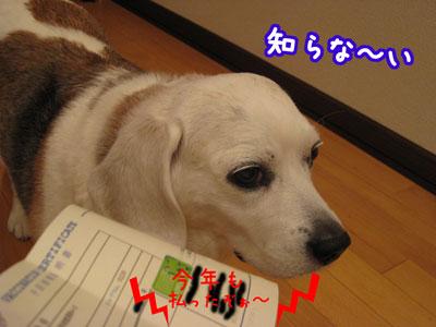 4_20090422205723.jpg