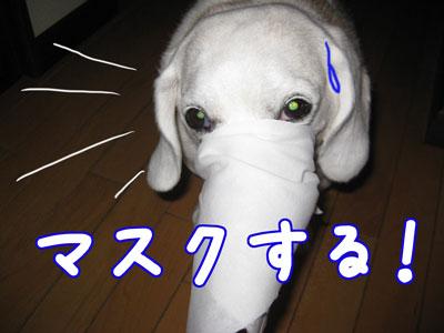 4_20090517174841.jpg