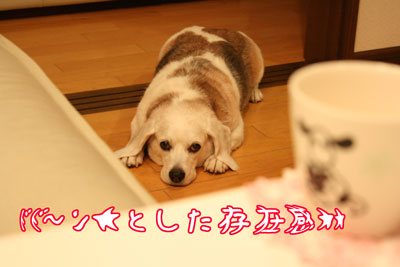 4_20090528195104.jpg