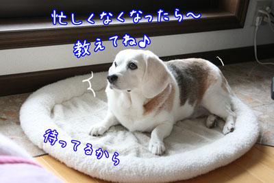 4_20090608214548.jpg