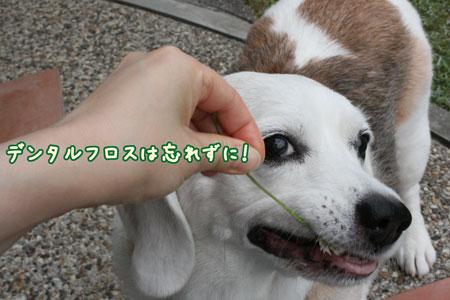 4_20090624154709.jpg