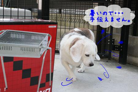 4_20090808142050.jpg
