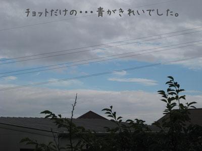 4_20090810181614.jpg