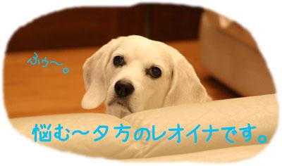 5_20081027111830.jpg