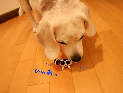 5_20081218203940.jpg