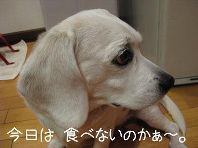 5_20081230182147.jpg