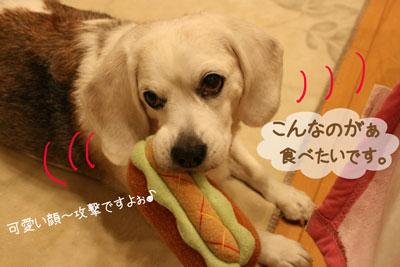 5_20090115115148.jpg