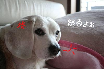 5_20090204175923.jpg