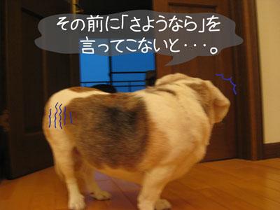 5_20090209185203.jpg