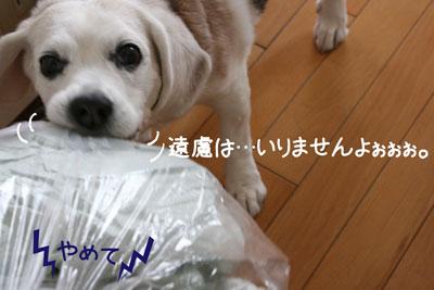 5_20090210180101.jpg