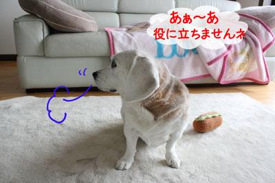 5_20090213155448.jpg