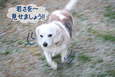 5_20090217182316.jpg