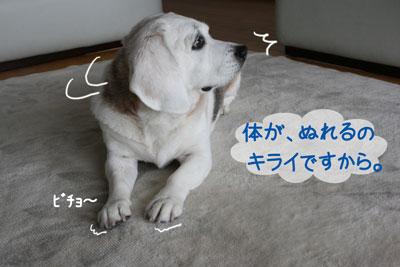 5_20090224171625.jpg