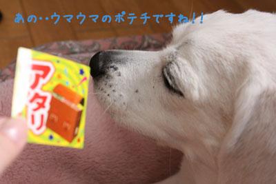 5_20090403201549.jpg