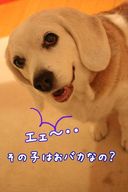 5_20090408204240.jpg