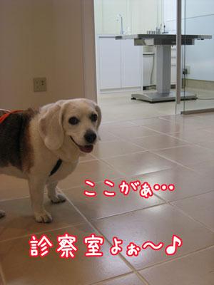 5_20090409220557.jpg