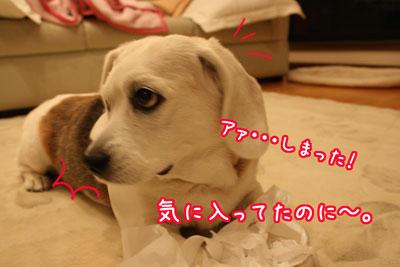 5_20090416111705.jpg