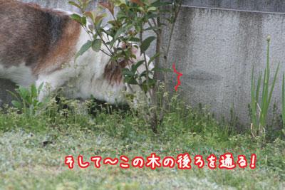 5_20090419221003.jpg