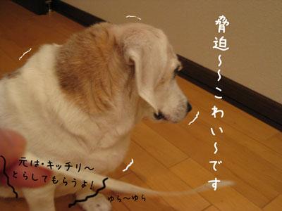 5_20090422205732.jpg