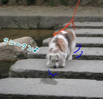 5_20090603203554.jpg