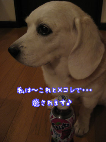 5_20090625112403.jpg