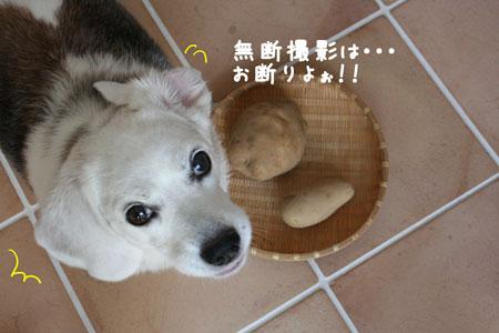 5_20090801211624.jpg