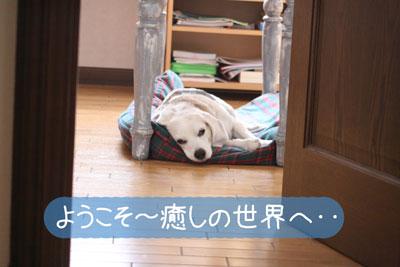 6_20081023120020.jpg