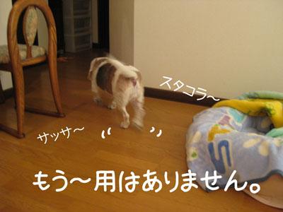 6_20081106130211.jpg
