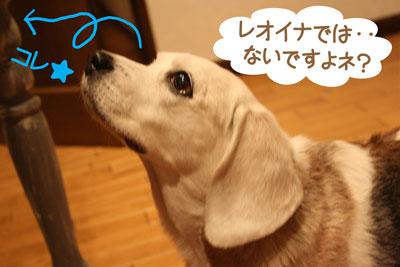 6_20081130194037.jpg