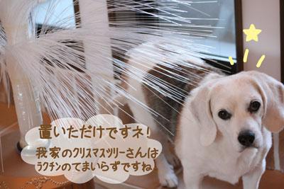 6_20081206162734.jpg
